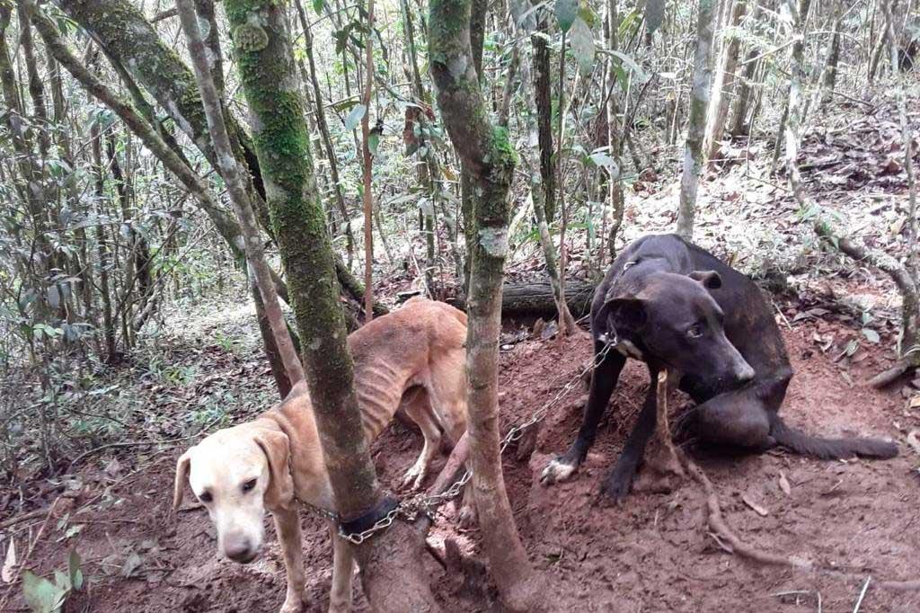 Cães foram encontrados bem magros  Foto: Corpo de Bombeiros