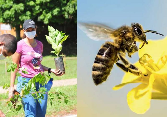 corredor de abelhas Brasilia