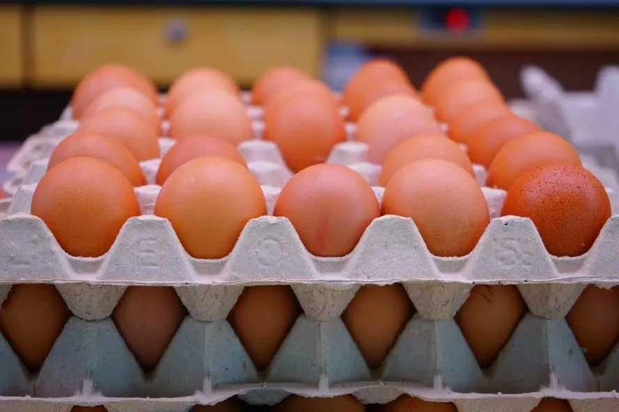 As galinhas de granja entregaram 53 bilhões de ovos em 2020. Neste ano, a produção deve chegar a 56 bilhões de unidades  Foto: Reprodução