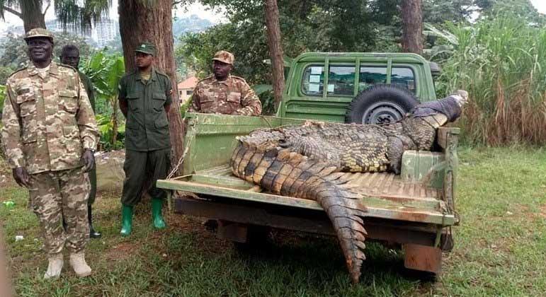 Animal assombrou vila por décadas e foi levado para fazenda especializada em crocodilos REPRODUÇÃO/FACEBOOK/UGANDA WILDLIFE AUTHORITY