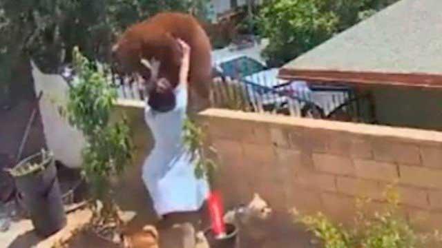 Hailey Morinico lutou contra um urso para defender seus cachorros nos EUA e vídeo viralizou na internet Foto: Reprodução/Tiktok