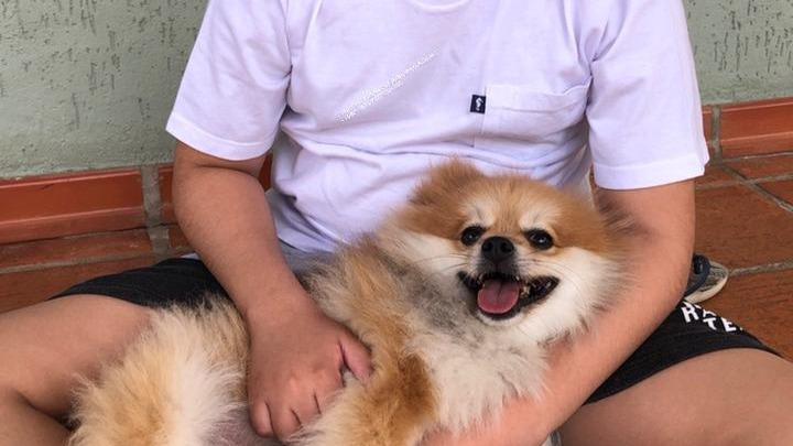 arthur com cão