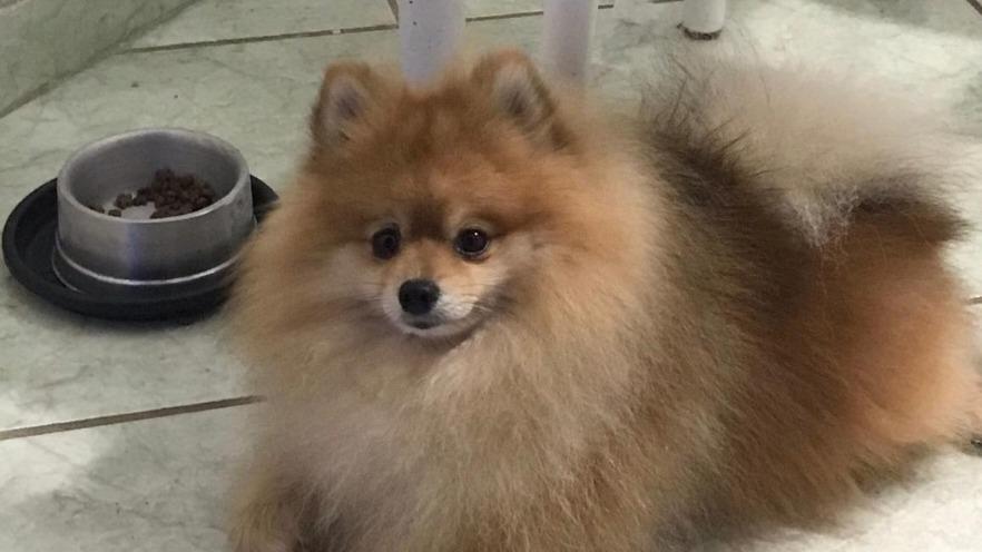 Família dá recompensa para quem encontrar cachorro em Ipatinga