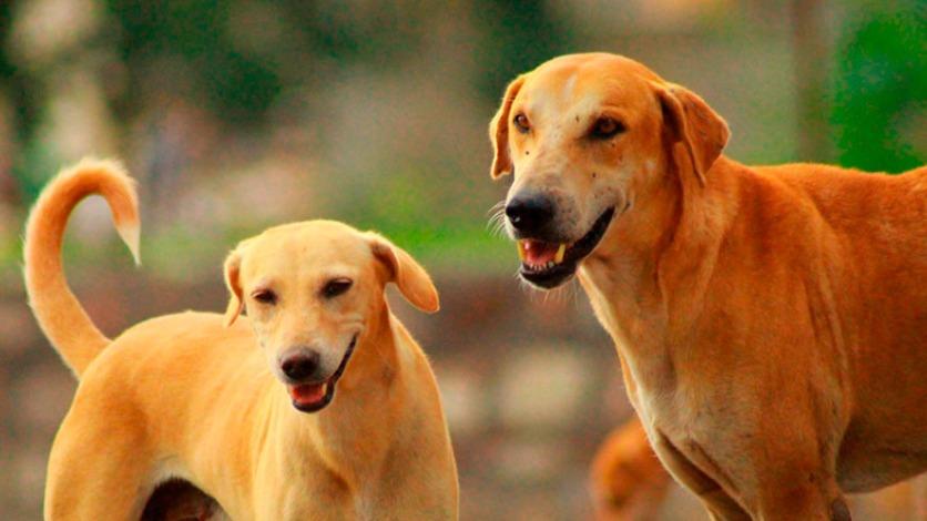 Pensão para cachorros em Minas Gerais