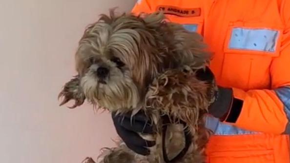 Bombeiros salvam cão de incêndio em Minas Gerais