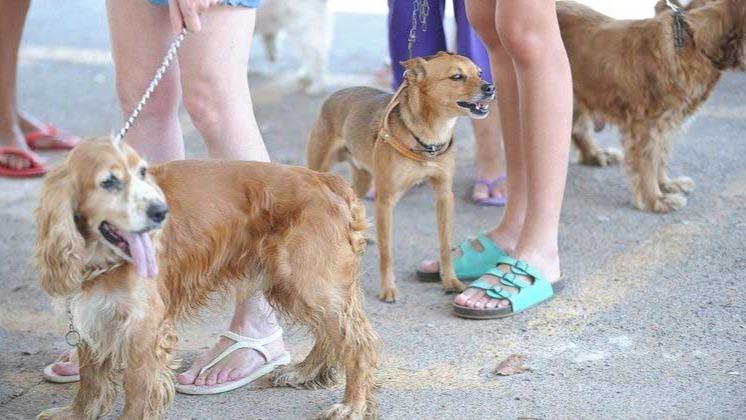 Pesquisa mostra taxa maior de infecção de animais pela covid-19 FABIO RODRIGUES POZZEBOM/AGÊNCIA BRASIL