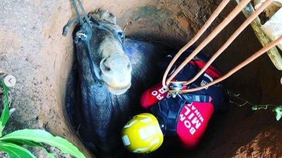 Bombeiros de Ipatinga resgatam cavalo que caiu em cisterna
