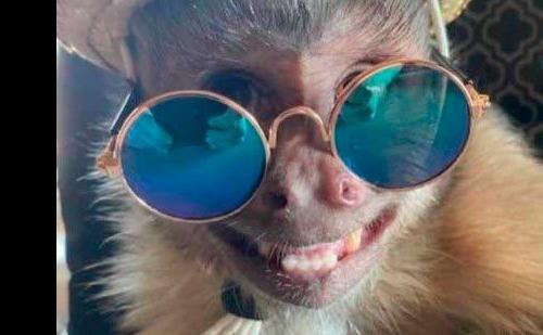 Macaco George Foto: Reprodução/Instagram