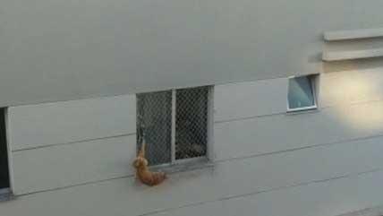 Animal ficou preso pelo rabo REPRODUÇÃO / RECORD TV MINAS