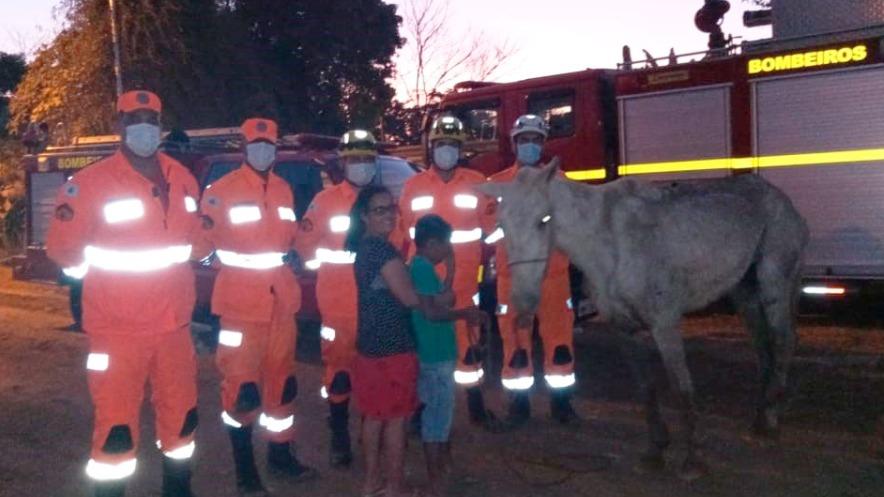 Cavalo resgatado