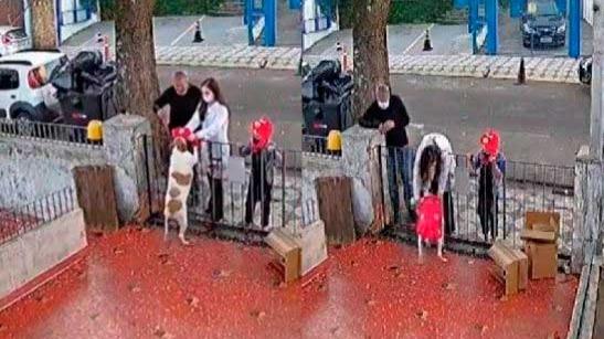 Casal leva roupa para cachorra que foi furtada - Fotos: reprodução Twitter