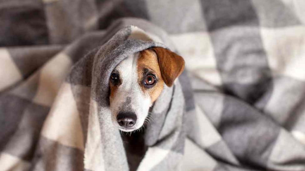 Frio e cachorro