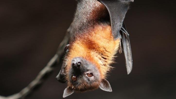 Parque Municipal de BH segue fechado devido a morcegos com raiva
