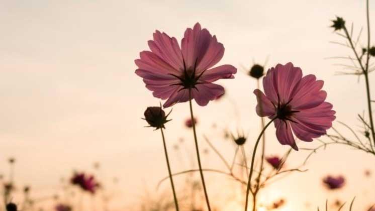Estação do ano conhecida pelo desabrochar das flores terá início nesta quarta-feira (22) FREEPIK