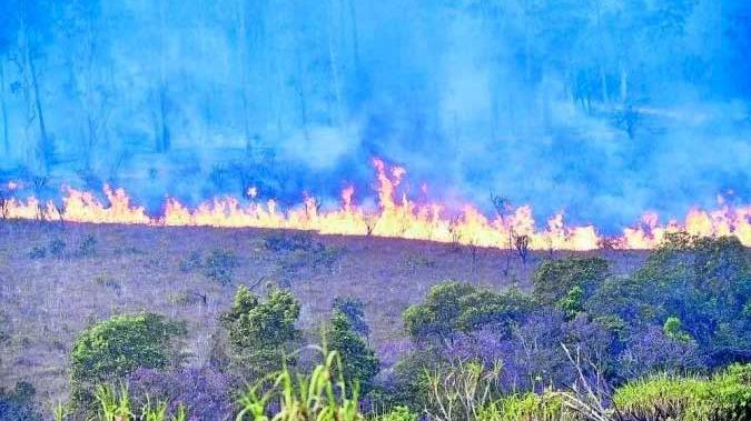 Área da Floresta Nacional de Brasília (Flona) perto de Ceilândia, em 9 de setembro de 2021 - (crédito: Minervino J?nior/CB/D.A Press - 9/9/21)