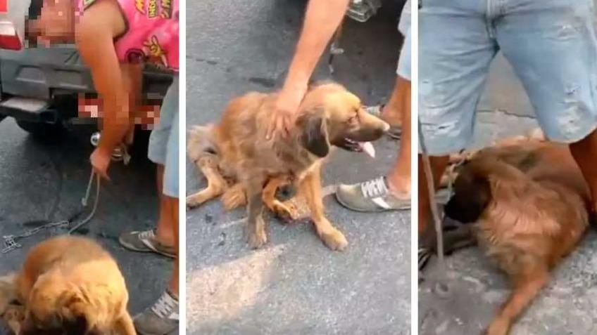 Homem arrastou cachorra em ruas do bairro Industrial Foto Foto: Instagram/Reprodução