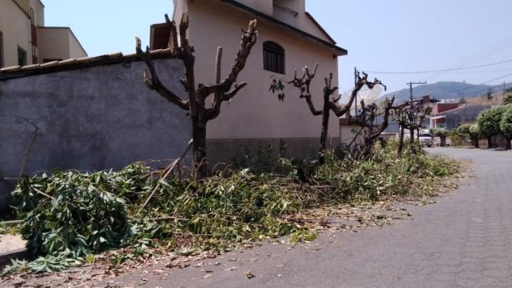 Moradores do bairro Quitandinha promovem poda drástica ilegal no Dia da Árvore