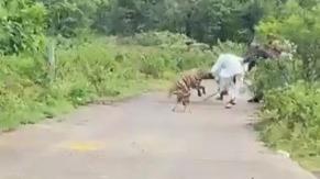 Vídeo: idoso fica ferido após ser atacado por hiena