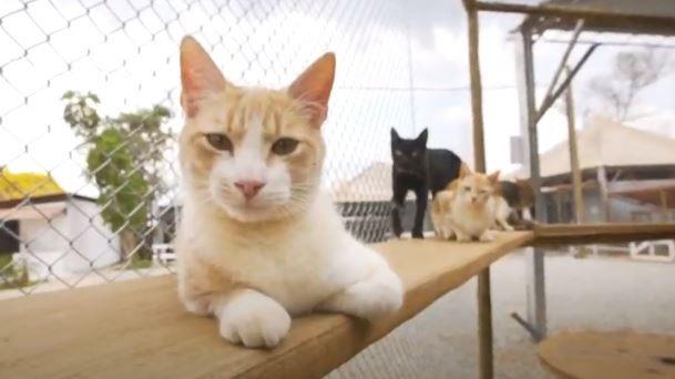 Pets resgatados em tragédia da Vale em Brumadinho podem ser adotados