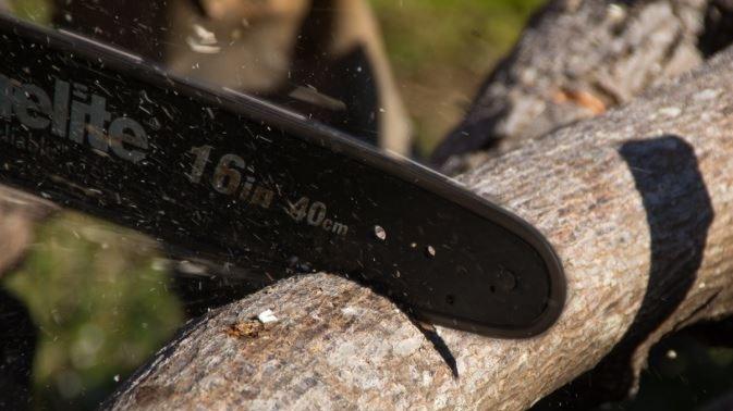 Homem morre após cair de árvore cortada por ele em Minas