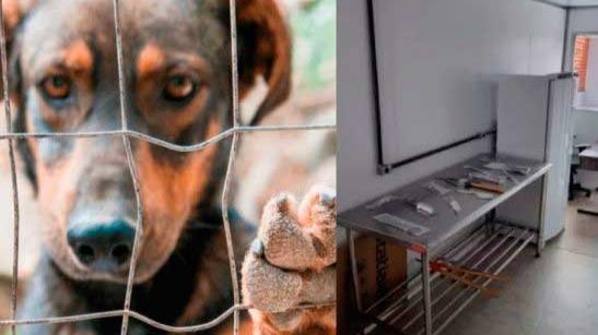 1º Instituto Médico Veterinário Legal do país vai fazer exames de corpo de delito em animais que podem ter sido vítimas de maus-tratos - Foto: divulgação